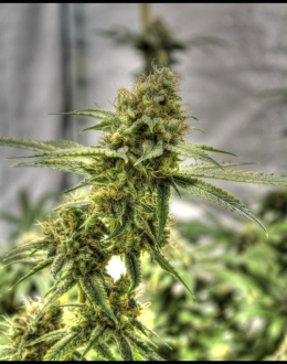 Medical ChemValley Ghost